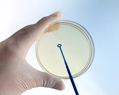 Did you know that agar is used in diagnostic tests?